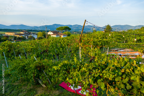 Picnic and wine tasting at sunset in the hills of Italy, Tuscany. Vineyards and open nature in the summer. Romantic dinner, fruit and wine.