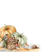 Watercolor Autumn Composition With Robin, Pumpkins, Basket, Mushrooms And Grass. Hand Painted Rustic Card Isolated On White Background. Floral Illustration For Design, Print, Fabric Or Background.