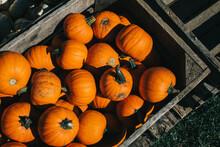 Pumpkins In A Crate