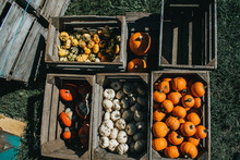 Pumpkins And Gourds In A Crate
