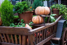 Many Pumpkins And Potted Plant...