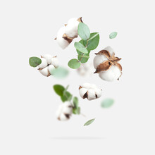 Flying Cotton Flowers, Green T...