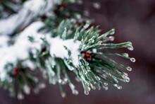 Winter Dark Background With Ic...