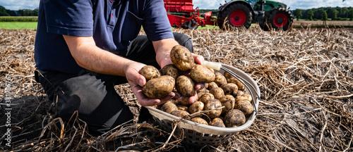 Fotografía Kartoffelernte -  frisch geerntete Kartoffeln vor unscharfer Ernteszenerie, land