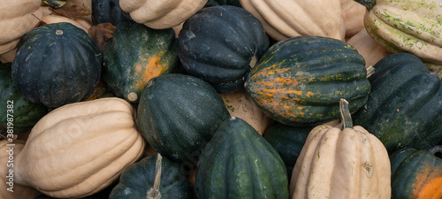 Foto Autumn vegetables food thanksgiving background banner - Top view lots of colorfu