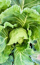 Vegetables. Detail Of Cabbage....