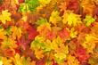 Yellow red orange autumn leaves