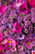 Purple Flowering Garden Plants In September In The English Garden