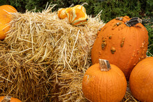 Outdoor Decorations For Fall W...