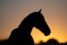 Horse On Sunset Silhouette