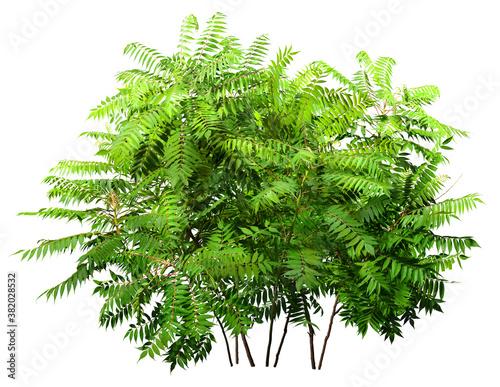 Fotografía Green plant