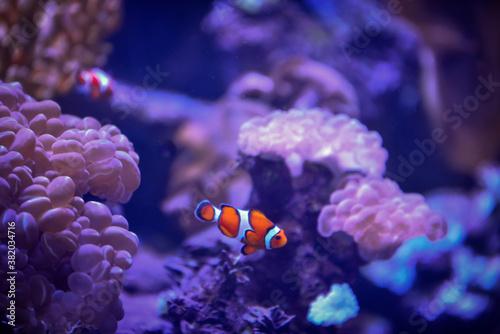 Fotografía fish in anemone