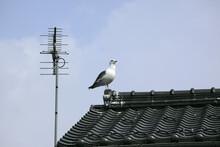 屋根のカモメ