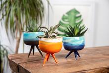Colorful Ceramic Cactus Pots W...