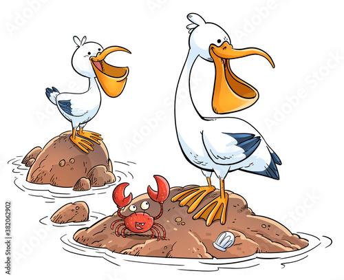 Fotografia Happy pelicans on a rock