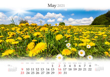 Calendar May 2021, B3 Size. Set Of Calendars With Amazing Landscapes. Blooming Dandelion And Camomile On The Spring Valley.