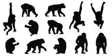 Chimpanzee Silhouettes