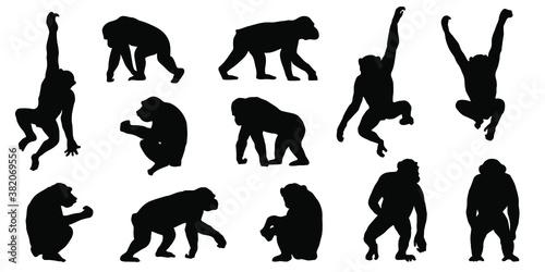 Fotografie, Tablou chimpanzee silhouettes
