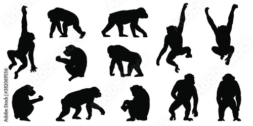 Obraz na plátně chimpanzee silhouettes