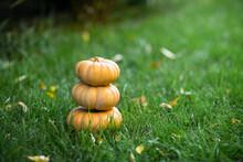 Three Orange Pumpkins Laying O...