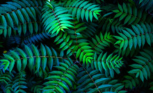 Colorful Fern Leaves On Black Background