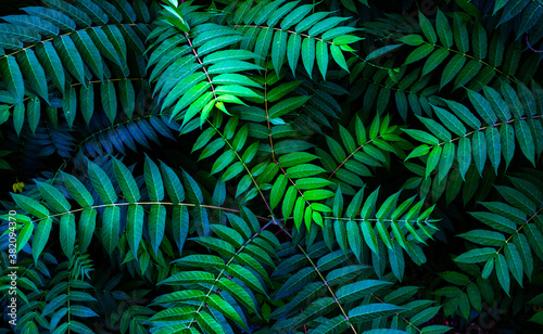 Fotografering Colorful fern leaves on black background