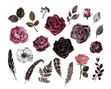 Watercolor Floral Set. Black, Deep Red, Burgundy, Purple Roses, Feathers And Leaves, Isolated On White Background. Vintage Botanical Illustration. Dark Moody Color Palette. Victorian Style.