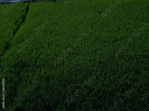 View of cloudy blue sky beautiful villages and rice fields of villagers in Indian states Fototapeta