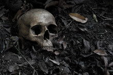 The Skull On Decay Leaf In Pit...