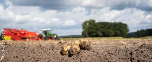 Fotomural Kartoffelernte -  frisch geerntete Kartoffeln vor unscharfer Ernteszenerie, land