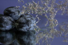 Plum On Blue  Background Still Life Fruits