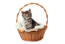 Cute Striped Kitten Sits In A ...