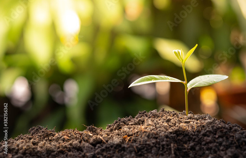 Agriculture and plant grow sequence with sunlight and green blur background Billede på lærred