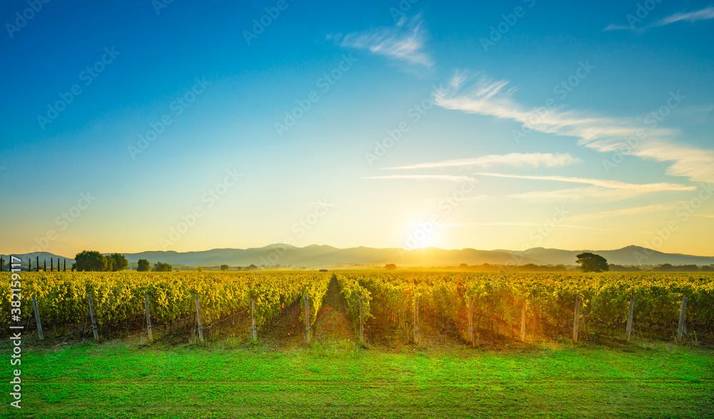 Bolgheri and Castagneto vineyards sunrise backlight. Maremma Tuscany, Italy