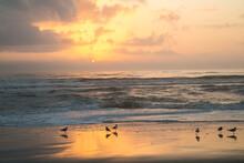 Sunrise With Laughing Gulls Sh...