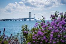 Shot Of Mackinac Bridge Through Purple Flowers On Summer Day In Michigan