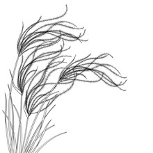 Corner Bouquet Of Outline Stipa Or Steppe Feather Grass With Leaf In Black Isolated On White Background.