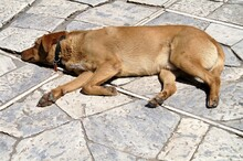 Dog Sleeping On A Pedestrian S...