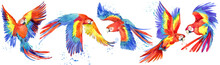 Ara Parrots Birds Watercolor S...