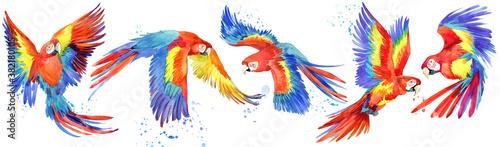 Canvastavla Ara parrots birds watercolor set. tropical wildlife