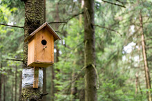 New Wooden Birdhouse For Birds Hanging On A Pine Tree