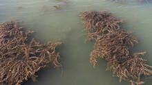 Murky Lake Water Dirty, Dirty ...