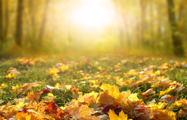 Sunlight in autumn forest. Colorful foliage in the park. Falling leaves natural background.Beautiful autumn landscape with yellow trees,green grass and sun.