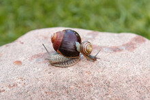 A Small Colorfull Snail And A ...