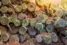 Old Logs Covered With Moss Sta...