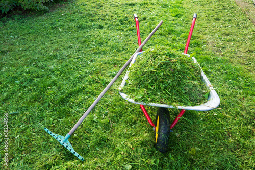Foto There is a garden wheelbarrow with red handles on the mowed lawn