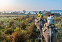 Early Morning Elephant Ride On...
