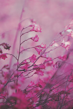 Pink/purple Flowers Bloom; Abstract Floral Background/texture