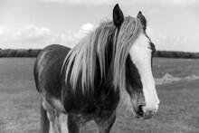 Close Up Of A Beautiful Horse ...