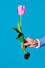 Man And Tulip